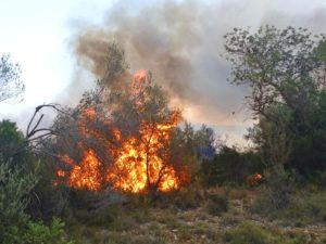 Incendi rural en Benicarló