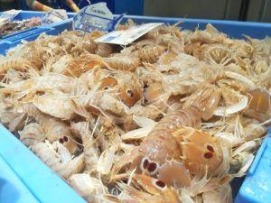 La galera: el crustáceo al alza del Mediterráneo